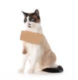 Comunicación del gato Fotos de archivo