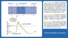 Comunicazione dei neuroni Tensione della membrana Fotografie Stock