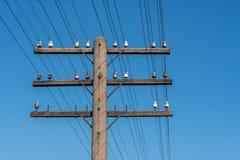 Comunicazione sotto cielo blu Fotografia Stock
