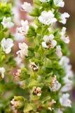 Comunidad de flores Foto de archivo libre de regalías