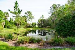 Comunidad de las palmas de Tampa Imagenes de archivo