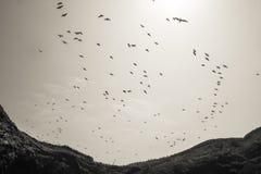 Comunidad de pájaros del guano en las islas de Ballestas de la costa de Perú imagen de archivo libre de regalías