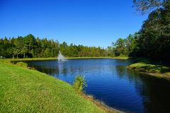 A comunidade das palmas de Tampa Imagem de Stock