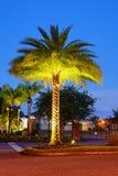 A comunidade das palmas de Tampa Foto de Stock