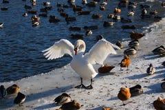 A comunidade dos pássaros. foto de stock royalty free
