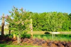 Comunità delle palme di Tampa Fotografie Stock