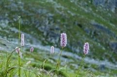 Comunità delle piante (poligono) Fotografia Stock Libera da Diritti