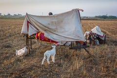 Comunità rurale di Banjara fotografia stock libera da diritti