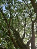 Comunque gli alberi immagine stock