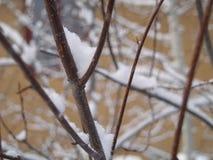 comute a queda de neve Fotos de Stock Royalty Free