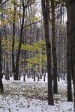 Conífero y árboles de hojas caducas en el fondo de la primera nieve en el parque del otoño Foto de archivo libre de regalías
