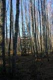 Conífero y árboles de hojas caducas en un día soleado del otoño a finales de octubre Gran ejemplo de la naturaleza foto de archivo