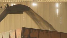 Con ayuda del transportador un grano se alza y cae hacia fuera en un cuerpo para el transporte metrajes