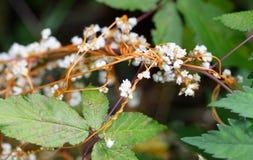 Con becco tremoli i fiori fotografie stock libere da diritti