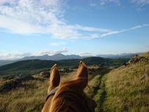 Con el montar a caballo de los oídos de los caballos en Cumbria Fotos de archivo libres de regalías