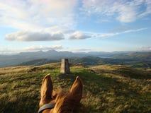 Con el montar a caballo de los oídos de los caballos en Cumbria Imagen de archivo