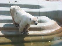 Con el oso 4 Foto de archivo