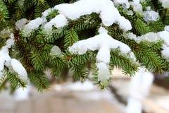 con el pino nevoso imagenes de archivo