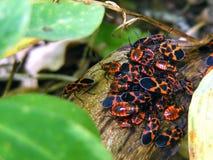 Con gli insetti Fotografia Stock