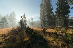 Con il sole irradia il passaggio attraverso la nebbia alla foresta della montagna Immagine Stock