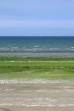 Con la alga marina cubierta arena en la playa de Miguel-en-Grève del santo (Bretagne) Fotos de archivo libres de regalías