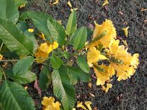 Con la flor amarilla floral torcida imagenes de archivo
