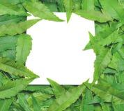 Con la tarjeta de papel la nota es rodeada por las hojas Imagen de archivo libre de regalías