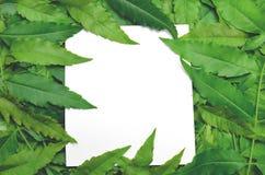 Con la tarjeta de papel la nota es rodeada por las hojas Fotos de archivo