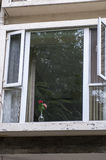 Con le finestre rosa Fotografia Stock
