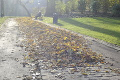 Con le foglie cadute nel parco di autunno, il Belgio, dicembre 2013 Immagini Stock Libere da Diritti