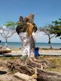 Con su tronco pintó blanco, el árbol fue cortado imagen de archivo