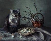 Con un gato Fotografía de archivo libre de regalías
