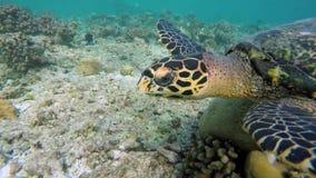 Con una tortuga en arrecife de coral almacen de metraje de vídeo