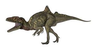Concavenator dinosaur roaring - 3D render. Concavenator dinosaur roaring isolated in white background - 3D render stock illustration