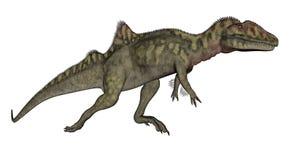 Concavenator dinosaur walking - 3D render. Concavenator dinosaur walking isolated in white background - 3D render stock illustration