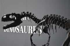 Concealed predator. Dinosaur in museum of science in Valencia Stock Image