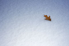 Conceito abstrato do inverno, folha do carvalho na neve Fotos de Stock Royalty Free