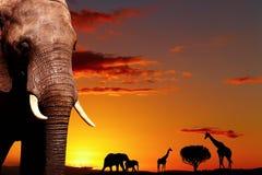 Conceito africano da natureza fotos de stock royalty free