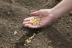Conceito agricultural Imagens de Stock