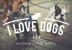Conceito bonito animal do cachorrinho do animal de estimação da amizade do divertimento do cão do amor Fotos de Stock