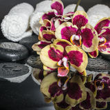 Conceito bonito de pedras do zen, orquídea de florescência dos termas do galho, phala Imagens de Stock