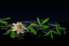 Conceito bonito dos termas da flor do passiflora e do ramo verde Fotos de Stock Royalty Free