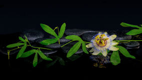 Conceito bonito dos termas da flor do passiflora e do ramo verde Foto de Stock