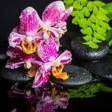 Conceito bonito dos termas da orquídea bonita do lilás do laço Fotografia de Stock