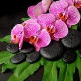 Conceito bonito dos termas de pedras do zen com gotas Fotos de Stock
