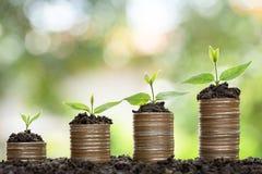 Conceito crescente do dinheiro, árvore que cresce na pilha do dinheiro das moedas imagens de stock