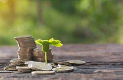 Conceito da árvore do dinheiro que cresce do dinheiro Financeiro e economia Fotos de Stock
