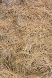 Conceito da agricultura, da ecologia e da seca - grama seca ou texto do feno Fotos de Stock Royalty Free