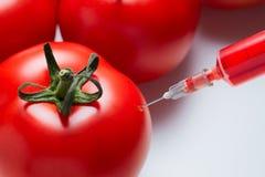 Conceito da alteração genética de um tomate imagem de stock royalty free