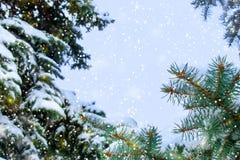 Conceito da beleza do inverno na floresta nevado do abeto foto de stock royalty free